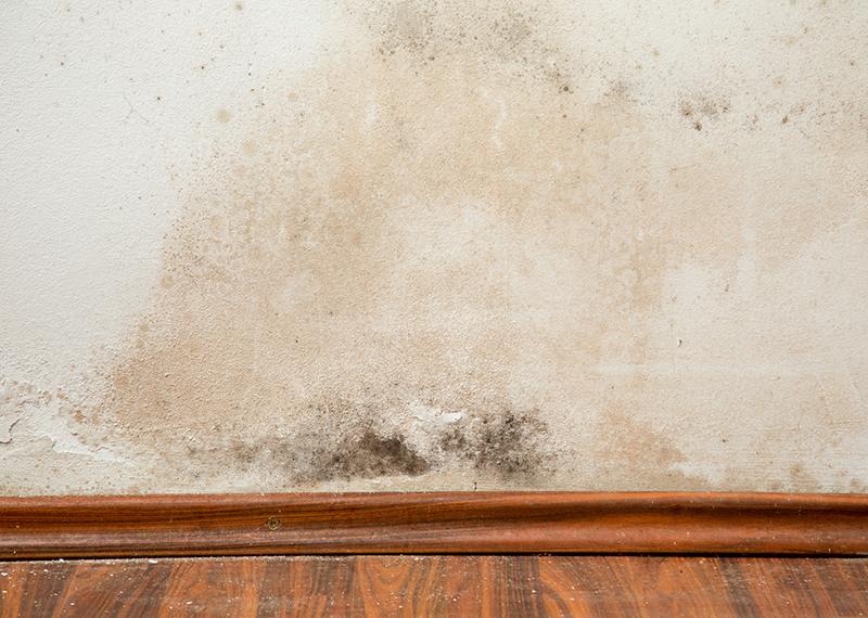 Feuchte Wande Wegen Aufsteigender Nasse Mauerwerkstrockenlegung